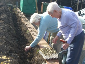 Auden_residents planting potatoes#2